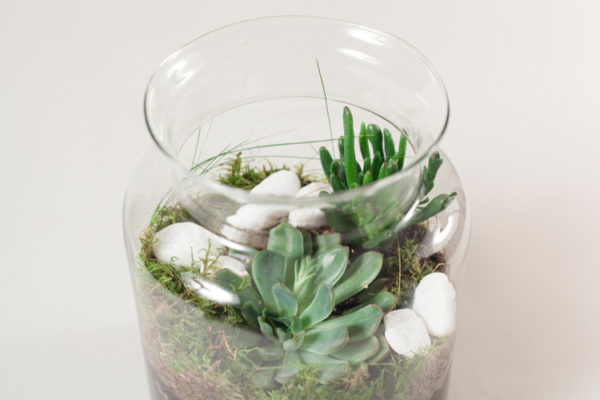 WORKSHOP-WILD WOOD LONDON X ALLPRESS ESPRESSO TERRARIUM