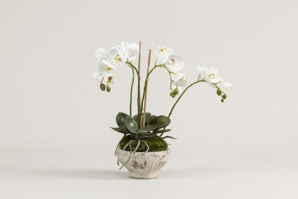 rustic-orchid-planter