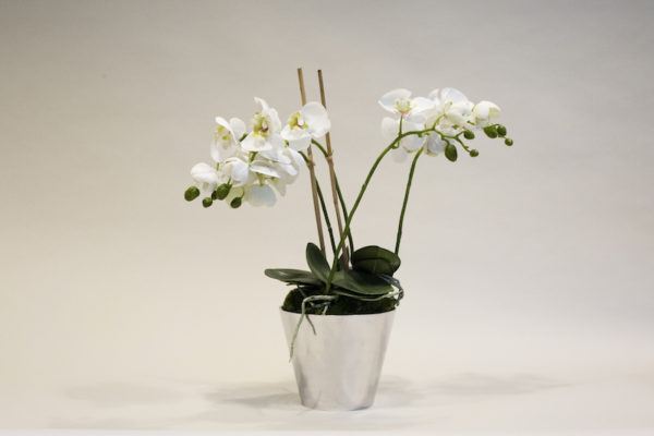ORCHID PLANTER-WILD WOOD LONDON
