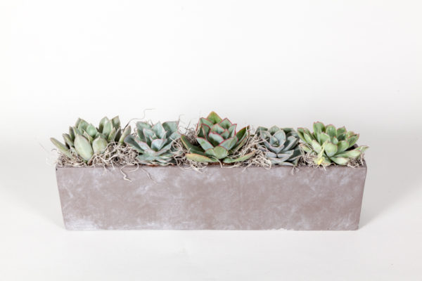 succulent-concrete-planter-wild-wood-london