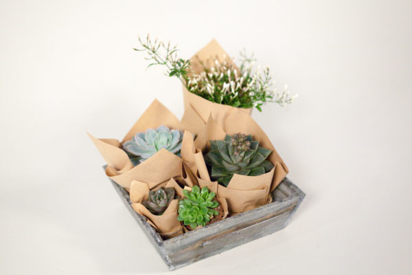 succulent-selection-wild-wood-london
